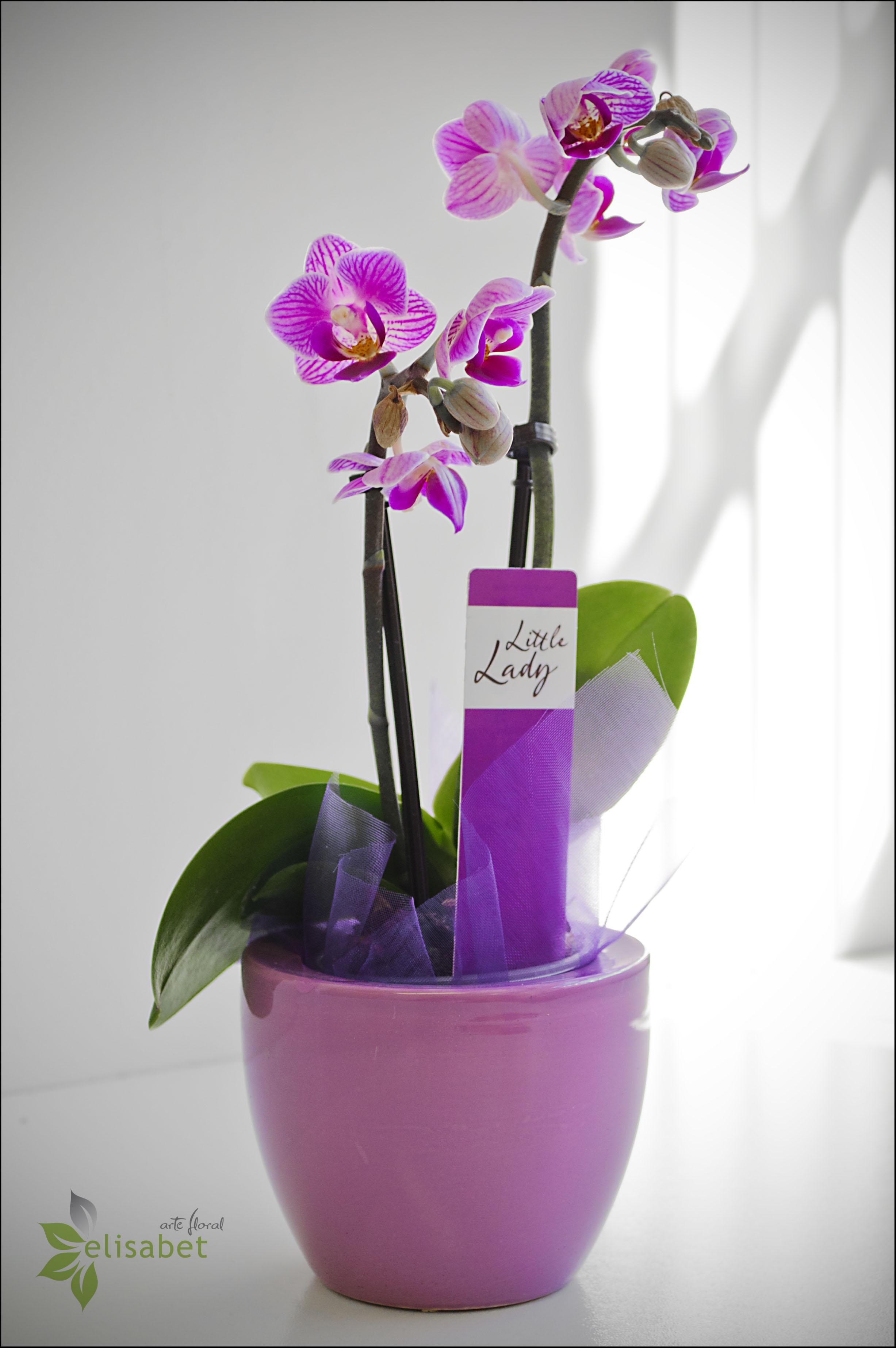 Cuidados Para Orquideas Beautiful Orquidea With Cuidados Para